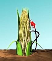 CornEthanol.jpg